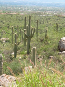 View from Pima Canyon (Photo Credit: Pamela Powers Hannley)
