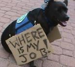job-dog