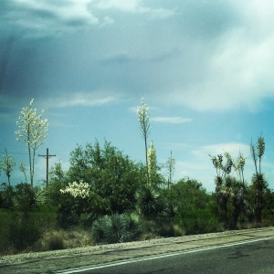 Natural desert vegetation along Oracle Road, just south of Oracle.